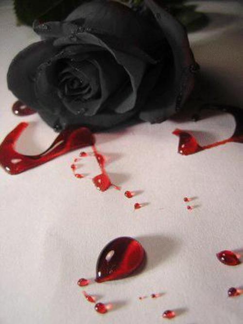 Nuestro primer encuentro (Priv. Nathasa) - Página 2 Bleeding_rose