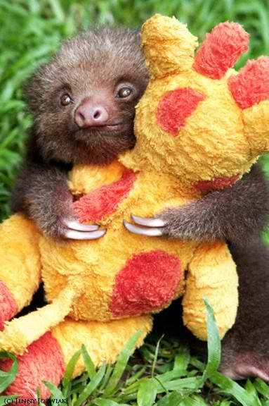 Sloth love awwww who doesn t love sloths