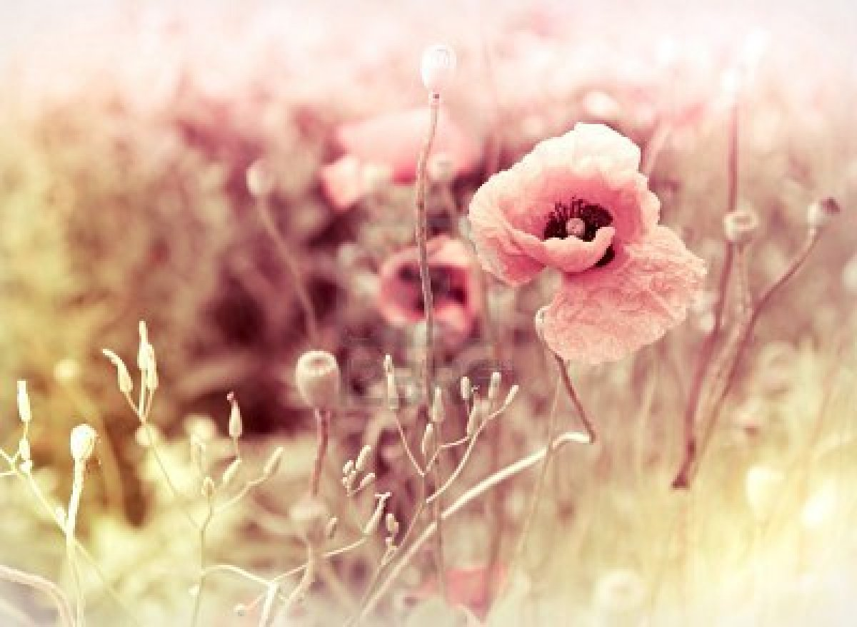 vintage flowers on tumblr - photo #49