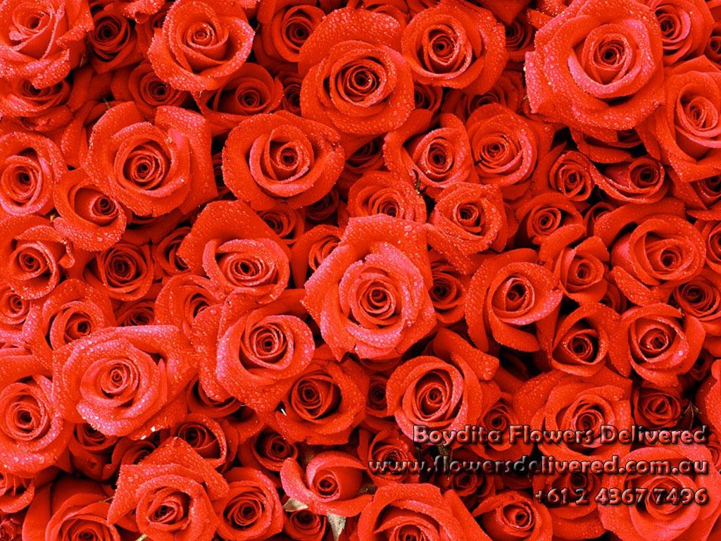 Red Roses Wallpaper Tumblr Wallpaper Roses Red Jpg