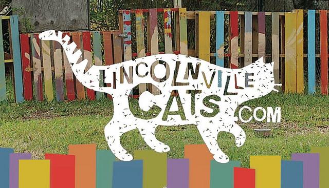 Lincolnville Cats