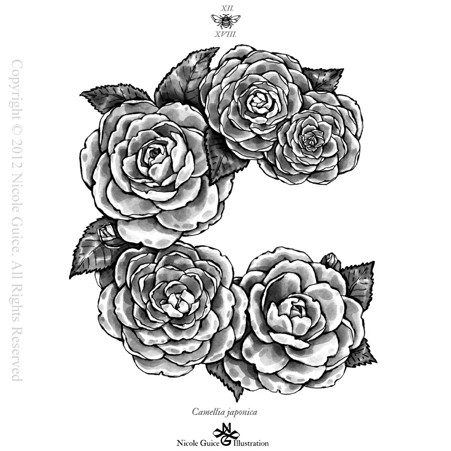 Tumblr Flowers Black And White Drawings Flower Drawings Tumblr