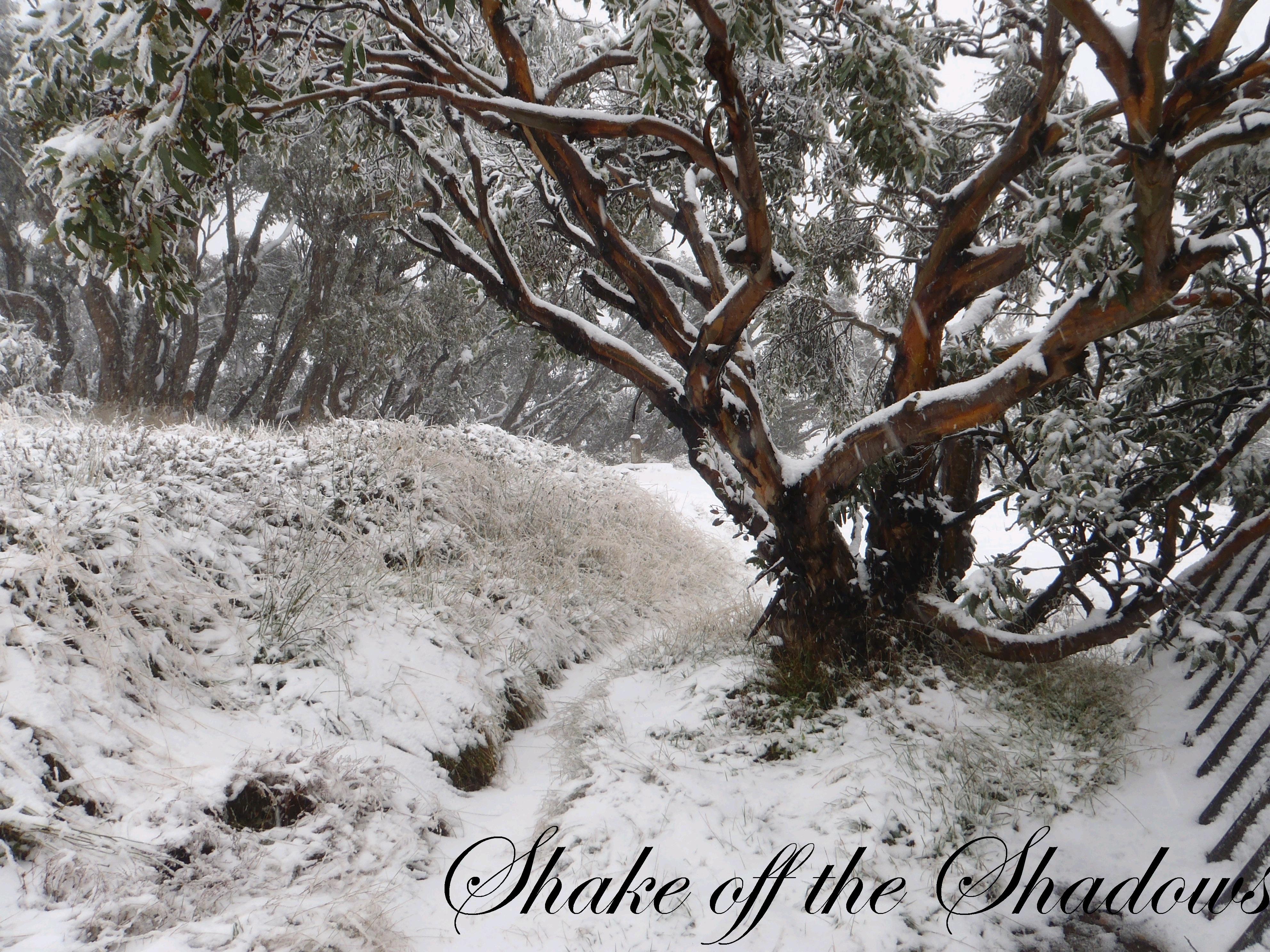 Shake Off The Shadows