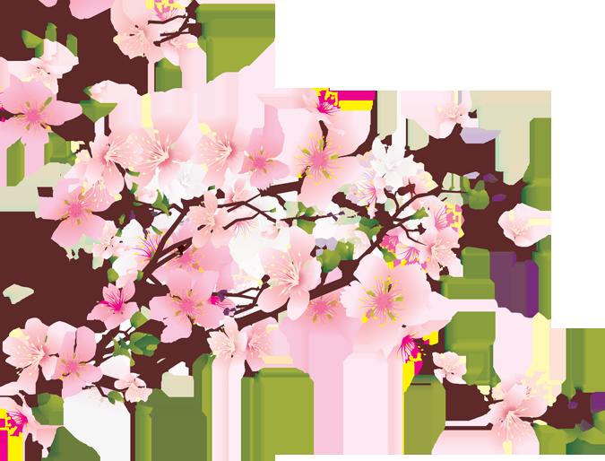 Cherry Blossom Transparent Gif