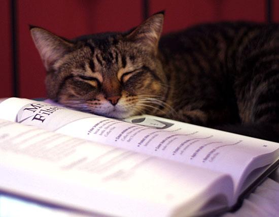 cat_book.jpg