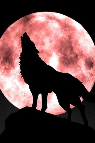Black wolf howling at moon - photo#23
