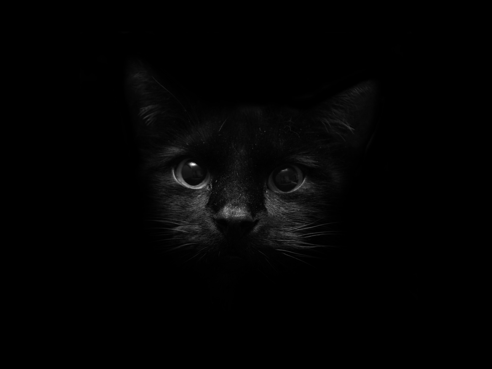 Black Cat Background Tumblr Tumblr Cats Wallpaper ...