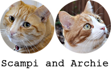 Scampi and Archie the Orange Cats
