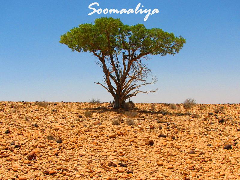 Somali Blog