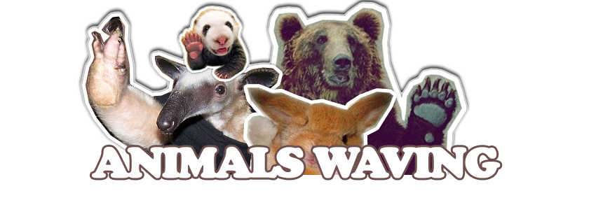 Animals Waving