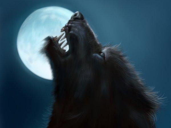 Tras la pista de los licántropos Werewolf_by_jinkies36-d1l24xh