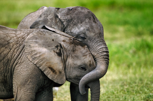 29 images about Tumblr elephants???? on We Heart It   See more ...