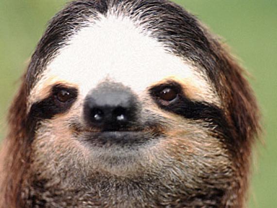 Sloth Onesie