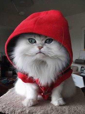 Elsa grumpy cat