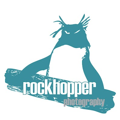 Rockhopper photography