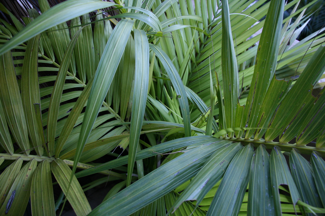 Bliss themes for Plante jungle