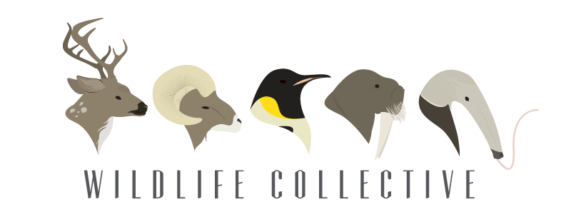 Wildlife Collective