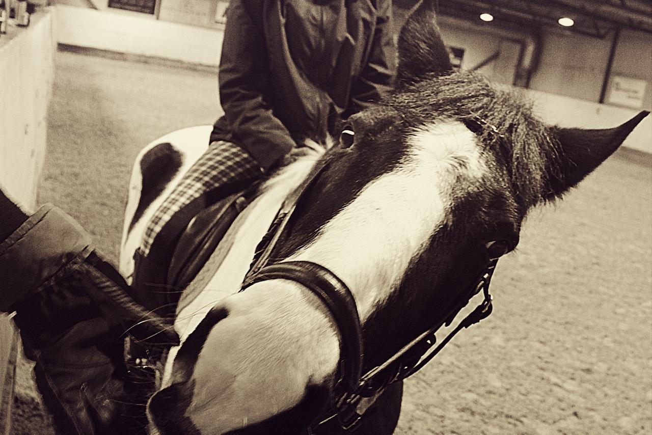 Horse Tumblr
